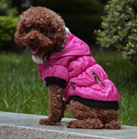 Classic zipper design Winter Dog Coat Puppy Clothes Watermelon Red