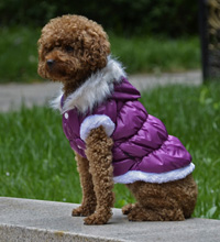 Fahion Plain Winter Dog Coat Puppy Clothing with Detachable Hat Purple