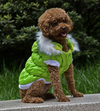 Fahion Plain Winter Dog Coat Puppy Clothing with Detachable Hat Green