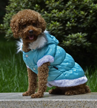 Fahion Plain Winter Dog Coat Puppy Clothing with Detachable Hat Blue