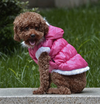 Fahion Plain Winter Dog Coat Puppy Clothing with Detachable Hat Watermelon Red