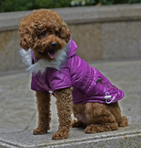 Fashion zipper design Adjustable button Winter Dog Clothes Purple