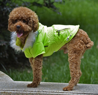 Fashion zipper design Adjustable button Winter Dog Clothes Green