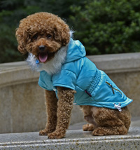 Fashion zipper design Adjustable button Winter Dog Clothes Blue