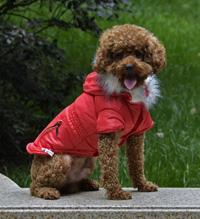 Fashion zipper design Adjustable button Winter Dog Clothes Red